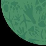 Gray Wolf National Wildlife Federation