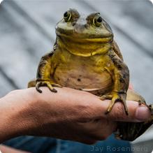 Bullfrog: Jay Rosenberg