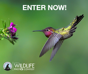 Enter Now! National Wildlife Photo Contest