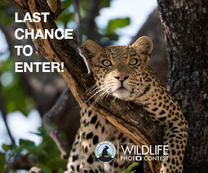 Last Chance to Enter! National Wildlife Photo Contest