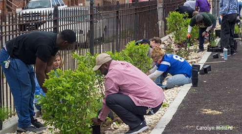 Planting rain garden at Baltimore church, Carolyn Millard