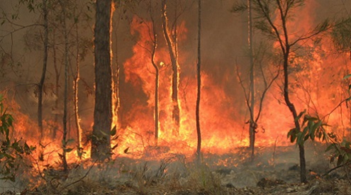 Australian Megafires Devastate Wildlife, Indigenous Communities Alike and Highlight Dire Need for Climate Action