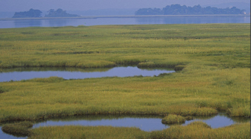 Great Marsh, credit: National Wildlife Federation