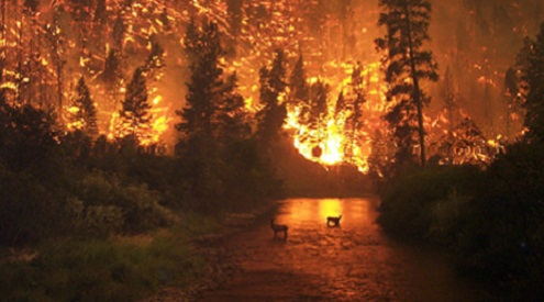 deer in wildfire, CCO
