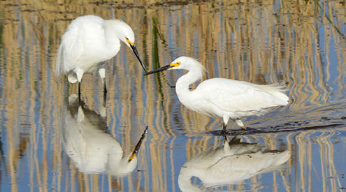 New Bill Would Rectify Decision to Reduce Protections for America's Migratory Birds