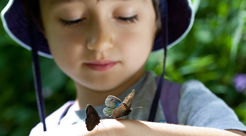 Boy with Butterflies, Shutterstock