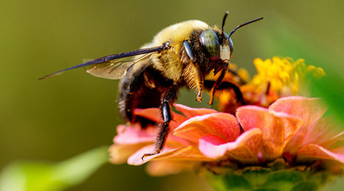 2019 Garden for Wildlife™ Photo Contest: Showcase Your Garden and Wildlife Photography Skills