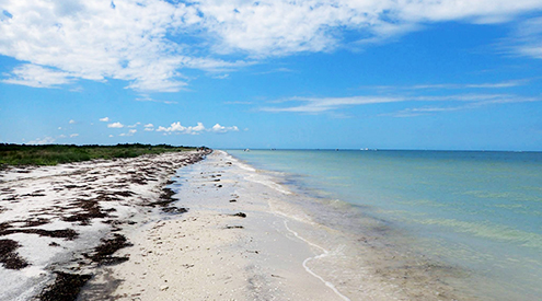 Honeymoon Island, Elizabeth Baillie