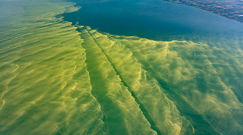 aerial photograph of harmful algal blooms over Lake Erie