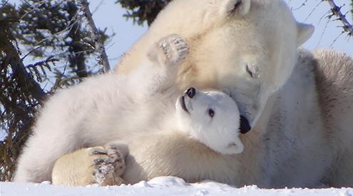 House Votes to Protect Alaska's Abundant Wildlife, Cultural Heritage