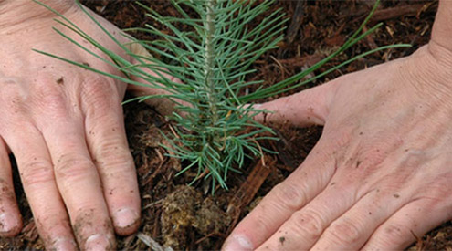 Gardening for Climate Change | National Wildlife Federation