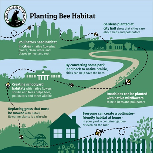 Planting Bee Habitat graphic