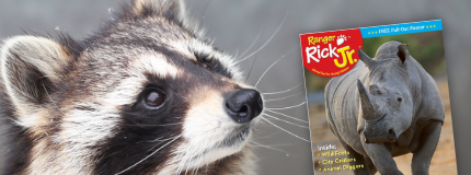 Raccoon and Ranger Rick catalog