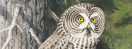 Great Gray Owl stamp art, Chuck Ripper