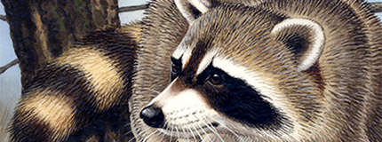 Raccoon Stamp Art