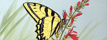 tiger swallowtail butterfly stamp art, Chuck Ripper