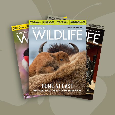 National Wildlife Magazine