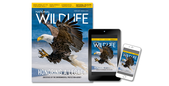 Subcribe to National Wildlife's Digital Edition