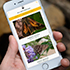 hand holding iPhone with Nature Guide app screen