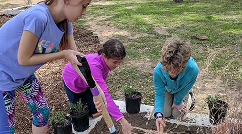 students working in the garden together
