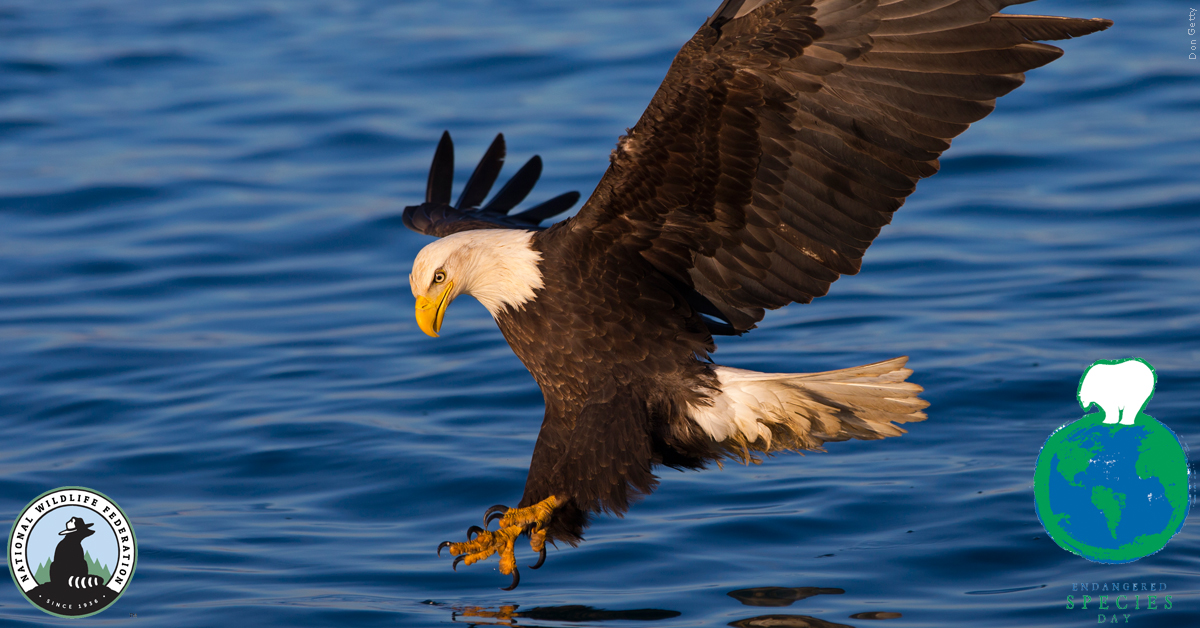 Bald Eagle, Don Getty