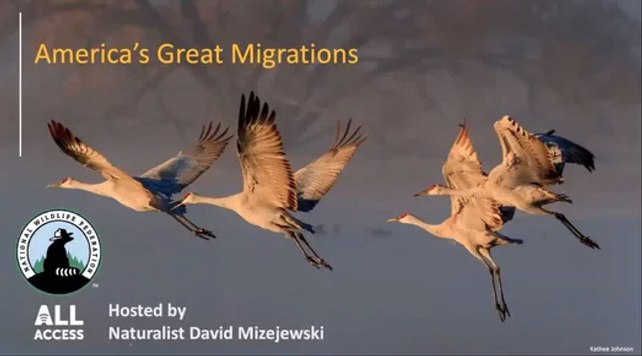 America's Great Migrations