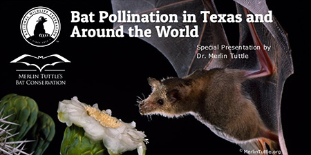 Bat Pollination in Texas and Around the World