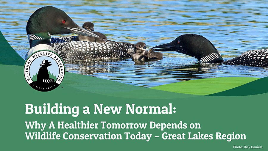 Building a New Normal: Why A Healthier Tomorrow Depends on Wildlife Conservation Today - Great Lakes Region