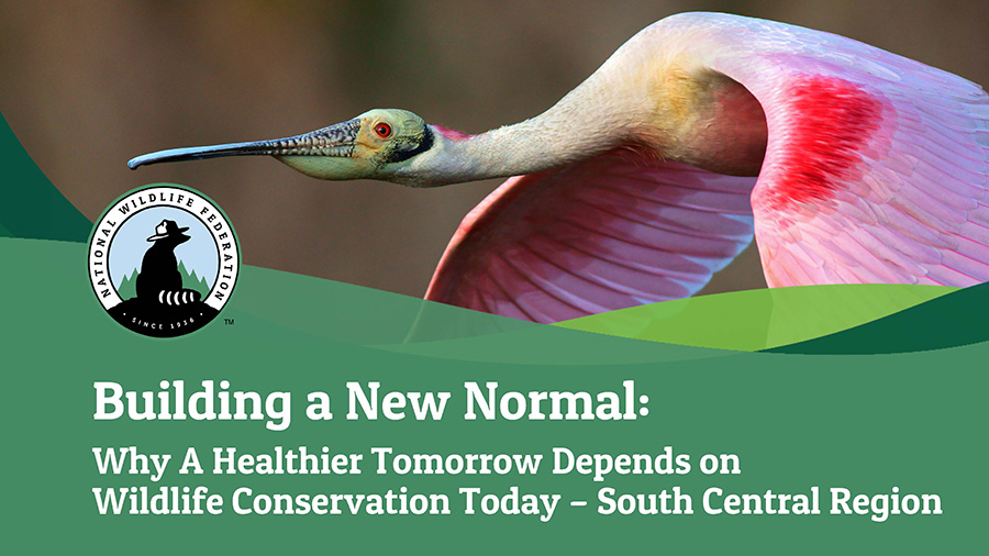 Building a New Normal: Why A Healthier Tomorrow Depends on Wildlife Conservation Today - South Central Region