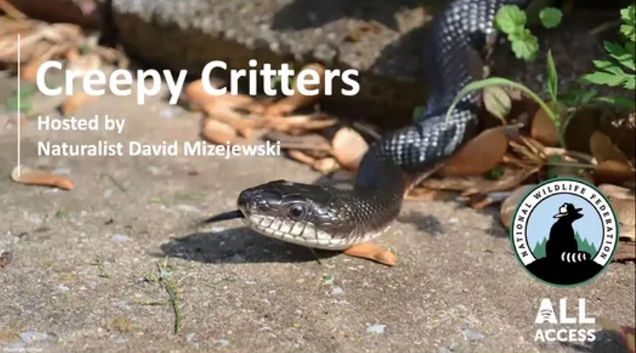 Creepy Critters - Hosted by Naturalist David Mizejewski