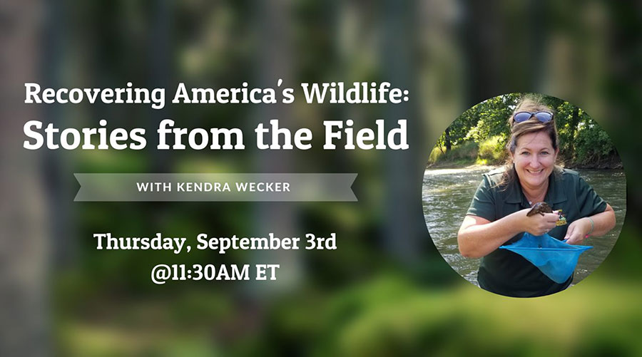Recovering America's Wildlife: Stories from the Field with Kendra Wecker - Thursday, September 3rd @ 11:30AM ET