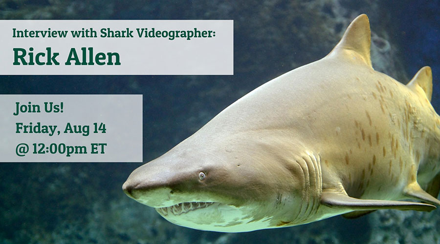 Interview with Shark Videographer: Rick Allen - Join us! Friday, Aug 14 @ 12:00pm ET