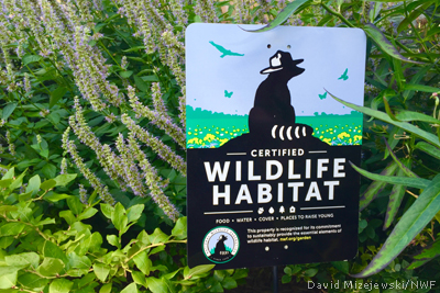 Photo of Certified Wildlife Habitat sign by David Mizejewski