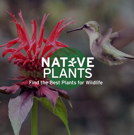 Native Plants Find The Best For Wildlife