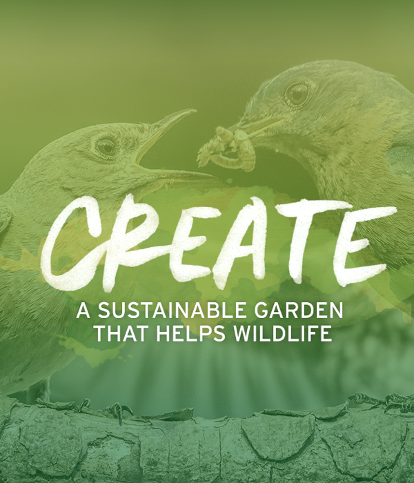 Garden for Wildlife Month | National Wildlife Federation