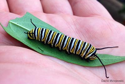 Food for Caterpillars