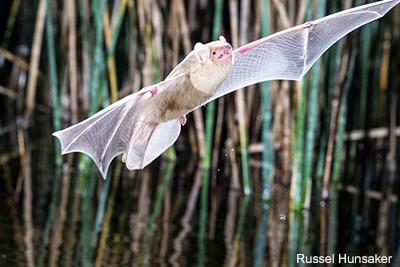 Build a Bat House on