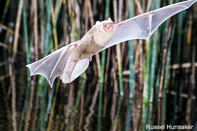 Bat California: Russell Hunsaker
