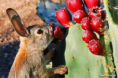Food - Garden for Wildlife | National Wildlife Federation