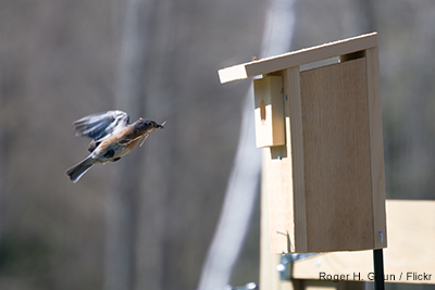 Nesting Box on