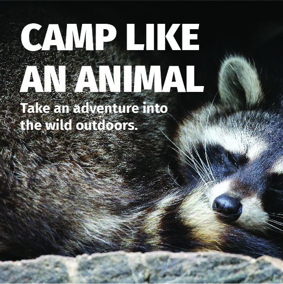 Share Your Campie - Great American Campout   National Wildlife Federation