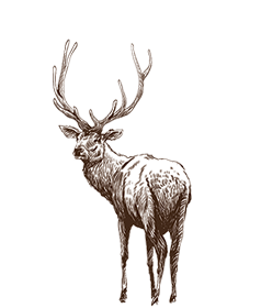 Elk Smoke Heat And The New Reality Outdoors National Wildlife Federation