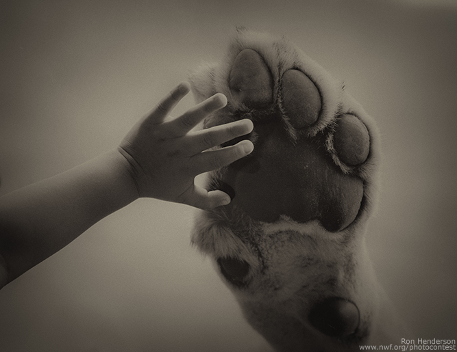 Lion Paw and Hand by Ron Henderson