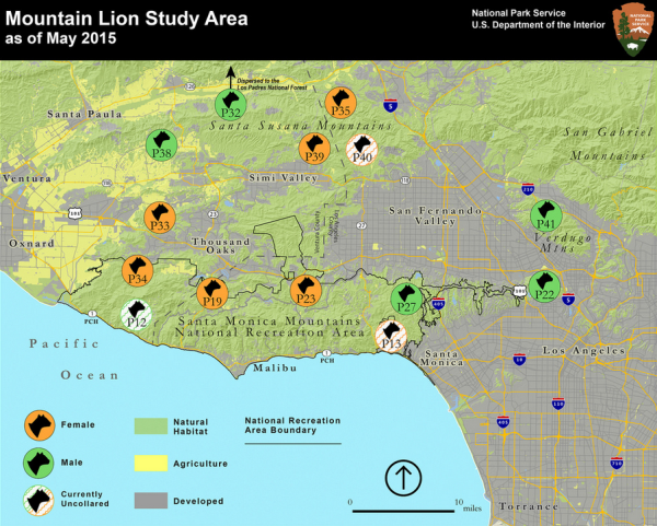 Mountain Lion Study Area