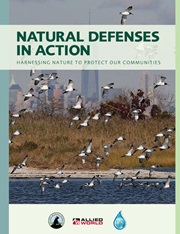 National Wildlife Federation Report: Natural Defenses in Action