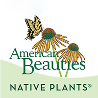 American Beauties native plants logo