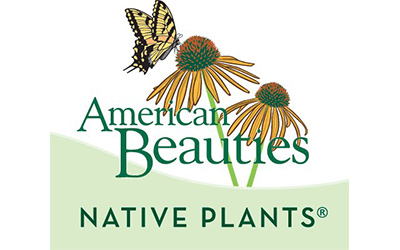 American Beauties Logo