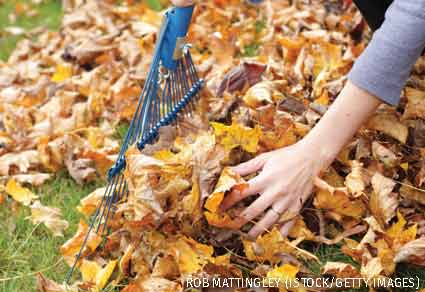 Leaf litter cleanup