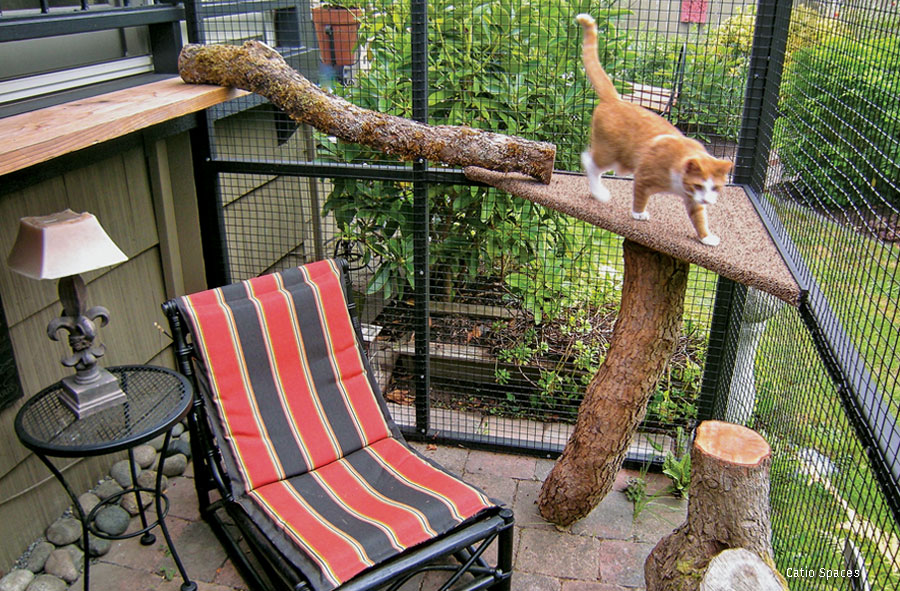 Outdoor enclosure for cats