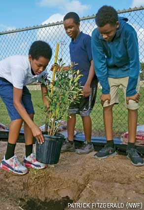 Lauderdale Lakes Middle School students planting trees, Broward County, FL